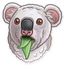 :koala: